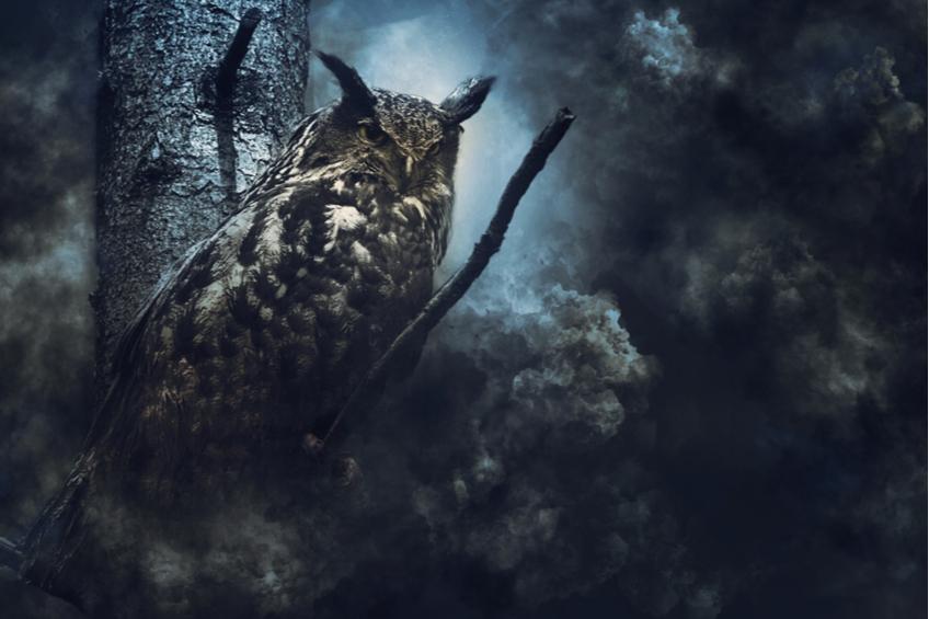 sova pták